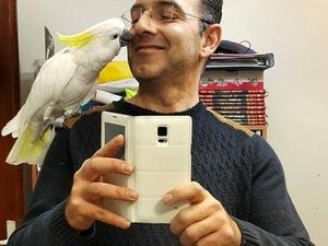 Sülfür kakadu papağanı ilanı