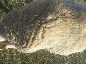 Arpadere Köyü hayvanlar ilanı