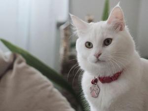 kedi Ankara fiyatları