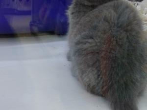 Çırpan Mah. kedi ilanı ver