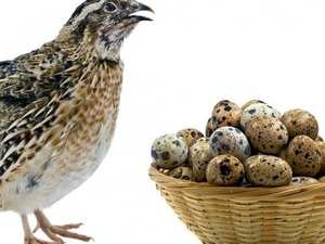 tamamiyle organik yumurta