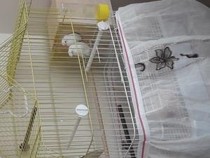 Diğer muhabbet kuşu fiyatları