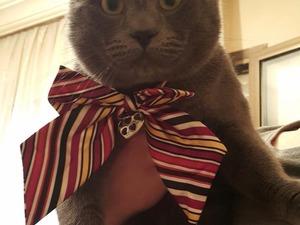 Altıntaş Mah. kedi fiyatları