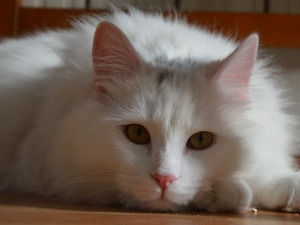 Kocataş Mah. kedi ilanları