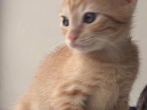 Erkek kedi Nurtepe Mah.