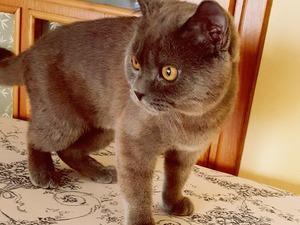 kedi ilanlari 4 Temmuz Mah.