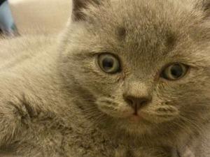 Etlik Mah. kedi fiyatları