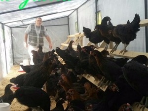 Demirciler Köyü hayvanlar fiyatları