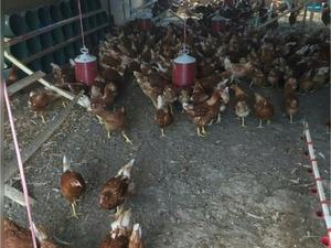 Arslanca Köyü hayvanlar ilanı ver