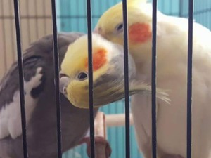 yaş 1 Papağan Hamidiye Mah.