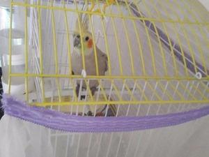 Sultan papağanı Osmangazi