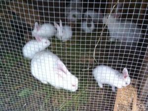 Uzuntarla Merkez Mah. tavşan ilanı
