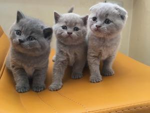 Bulgurlu Mah. kedi ilanı