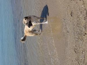 Güzelçamlı Bld. köpek ilanı ver