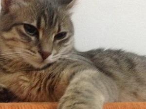 kedi Melez fiyatları
