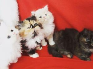 Zuhuratbaba Mah. kedi ilanı ver