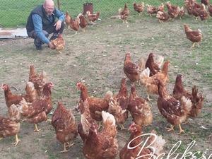 Dedecik Köyü hayvanlar ilanları