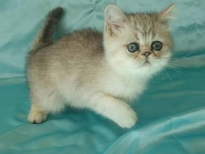 100. Yıl Mah. kedi ilanı