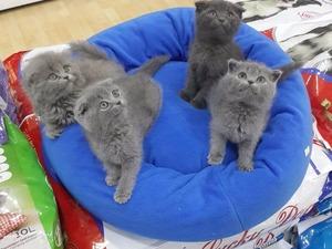 kedi ilanlari Ostim OSB