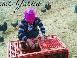 Karaahmetli Köyü hayvanlar ilanı