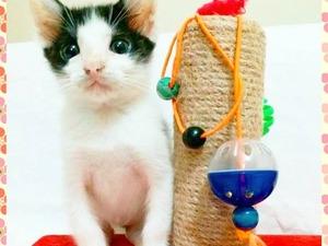 Erkek kedi Mecidiyeköy Mah.