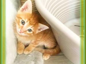 Levent Mah. kedi ilanı