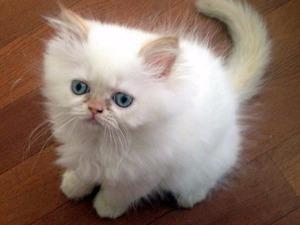 Bostancı Mah. kedi ilanları