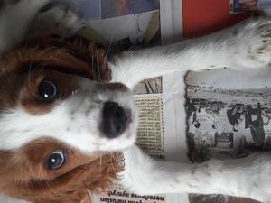 yaş 0-3 Aylık köpek Cami Mah.