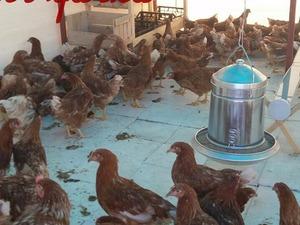 Kesmeburun Köyü hayvanlar ilanı ver