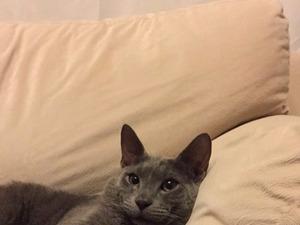 Kavaklı Mah. kedi fiyatları