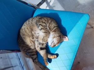 Yenikent Mah. kedi ilanları