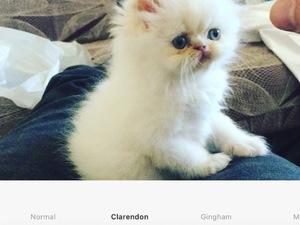 Tepekule Mah. kedi ilanı
