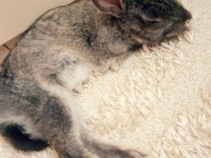 Ada tavşani tavşan Ataşehir