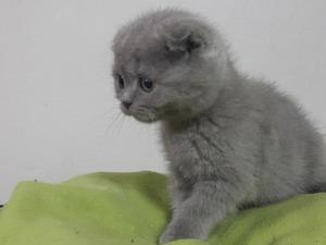 Harbiye Mah. kedi ilanları