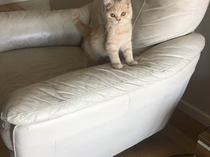 3-6 Aylık kedi Acıbadem Mah.