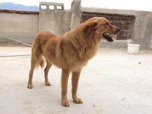 yaş 2 köpek Cumhuriyet Mah.