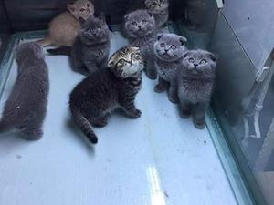 Kızılay Mah. kedi ilanları