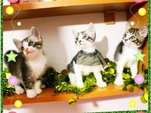 Çeliktepe Mah. kedi ilanı