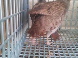 Yenişehir Mah. hayvanlar ilanı ver