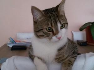 Atakent Mah. kedi ilanı ver