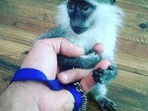 Batıköy Köyü hayvanlar ilanları