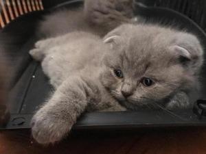 0-3 Aylık kedi Merkez Mah.