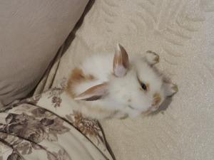 Diğer tavşan ırkı Dişi ve Erkek Cumhuriyet Mah.