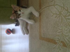 Dişi kedi Atakent Mah.