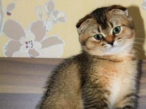 Cevizli Mah. kedi ilanı