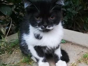 Diğer kedi ırkı Sahibinden 0 TL