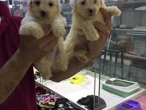 Kızılay Mah. köpek ilanı