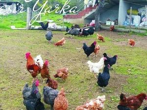 Akpınar Köyü hayvanlar ilanı ver