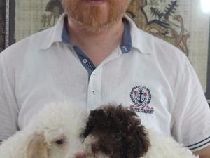 Altınşehir Mah. köpek ilanı