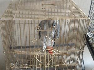 Papağan fiyatları Melikgazi